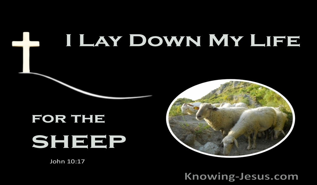 John 10:17 I Lay Down My Life For The Sheep (white)