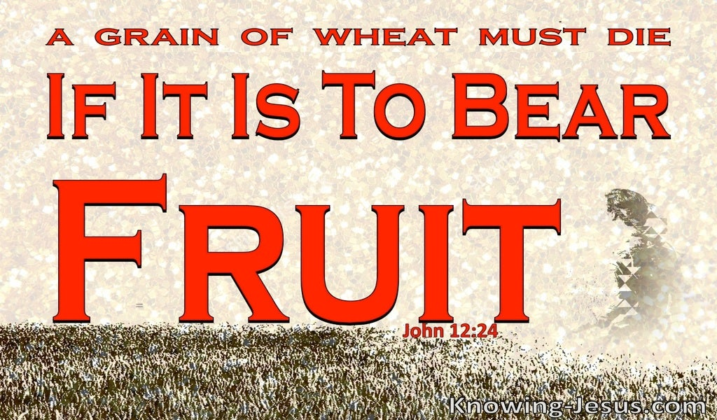 John 12:24 Unless A Grain Of Wheat Dies:red
