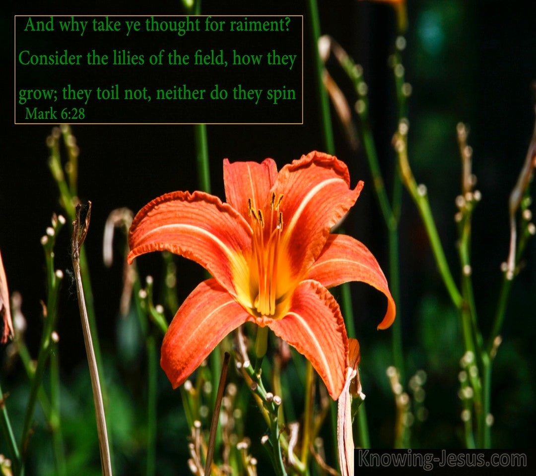 Mark 6:28 Consider The Lilies Of The Field (green)
