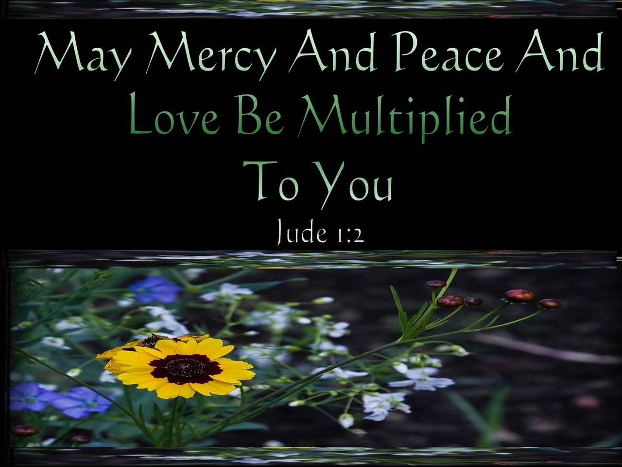Jude 1:2 Mercy And Peace And Love Be Multiplied To You (green)
