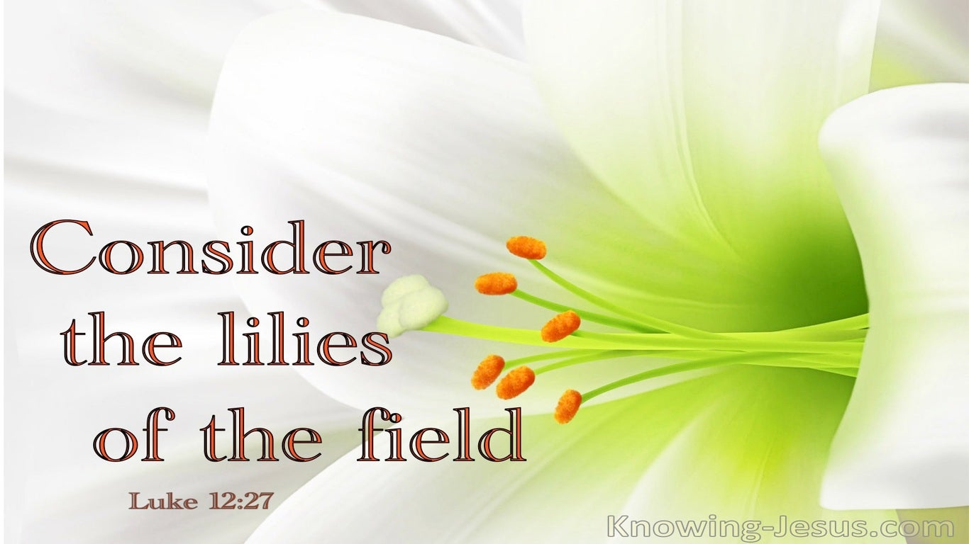 Luke 12:27 Consider The Lilies Of The Field (white)