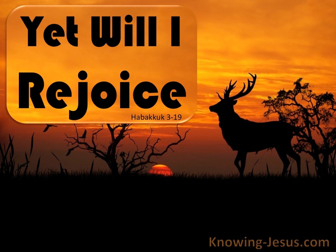 Yet Will I Rejoice (devotional) (black)- Habakkuk 3:19