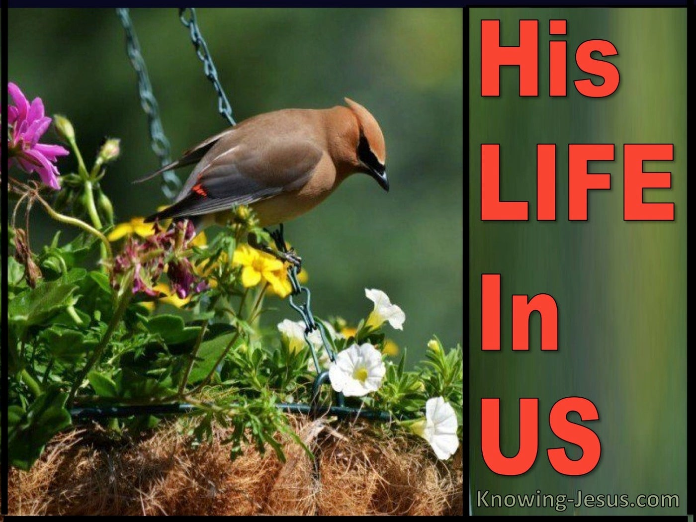 His Life In Us (devotional) (red)
