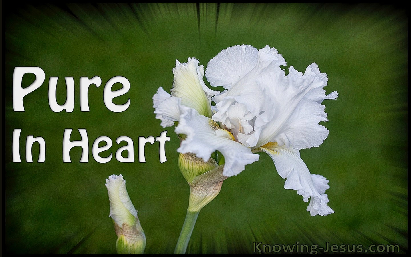 Pure In Heart (devotional) (white) - Proverbs 22:11