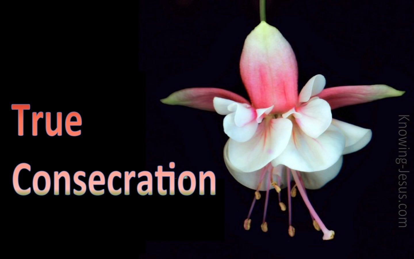 True Consecration (devotional) (pink)