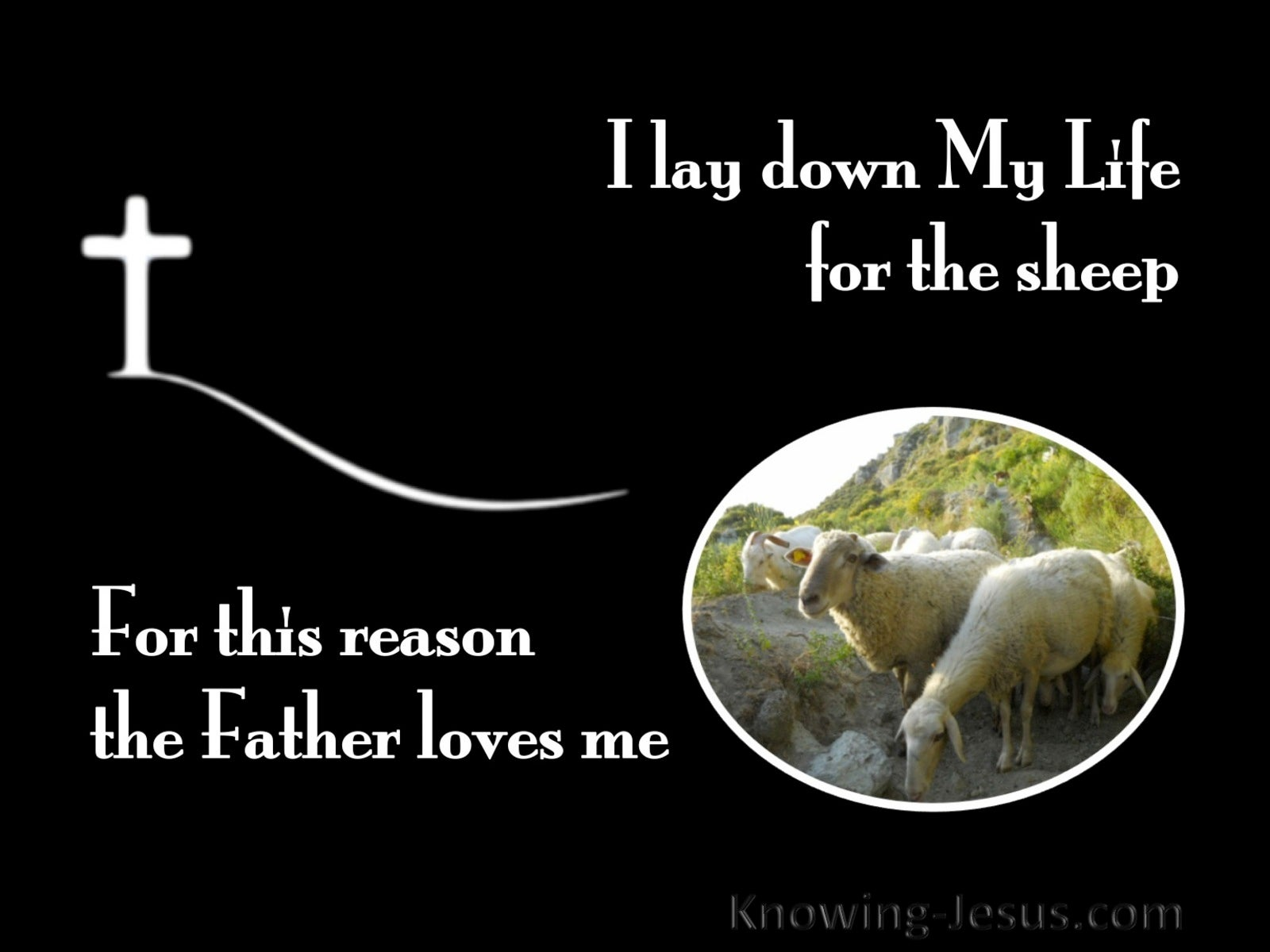 John 10:17  I Lay Down My Life For The Sheep (black)