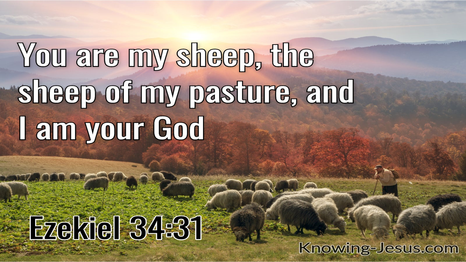 Ezekiel 34:31 You are My Sheep, the Sheep of My Pasture