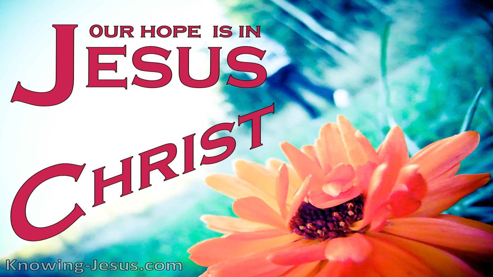 1 Corinthians 15:19 Our Hope Is In Christ (red)