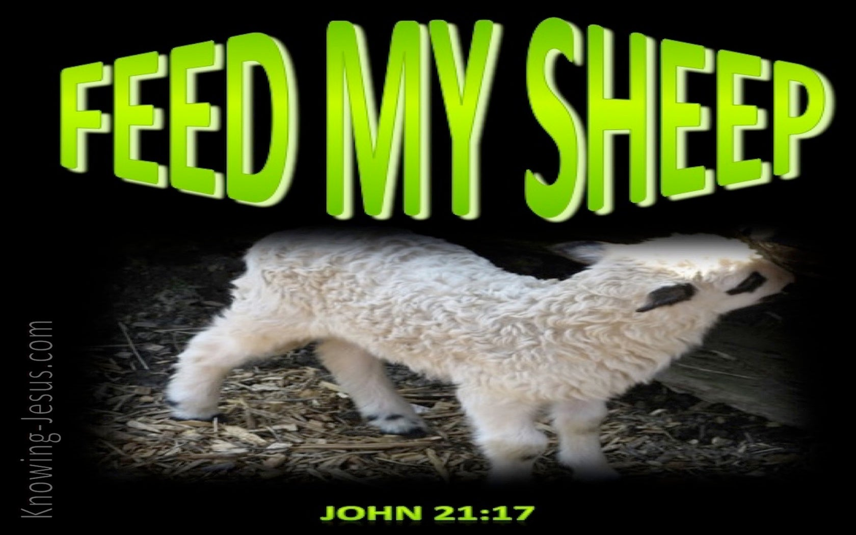 John 21:17 Feed My Sheep (green)