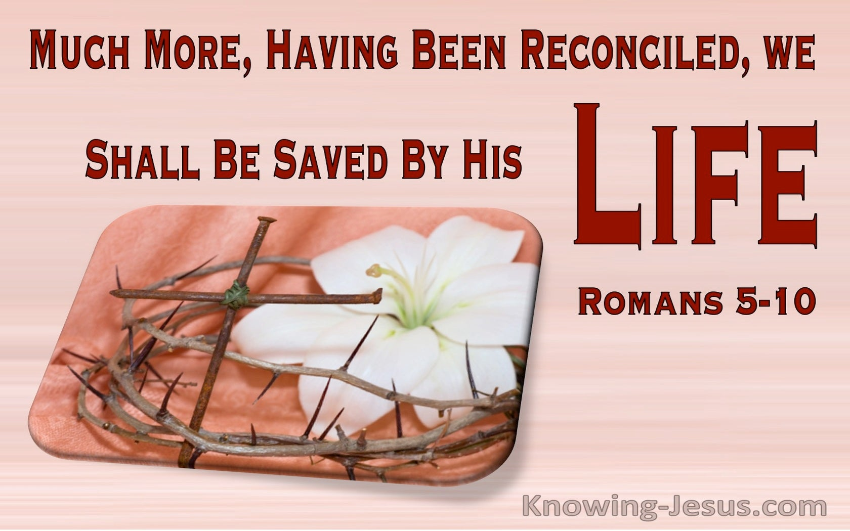Romans 5:10 Much More, Having Been Reconciled, We Shall Be Saved By His Life (pink)