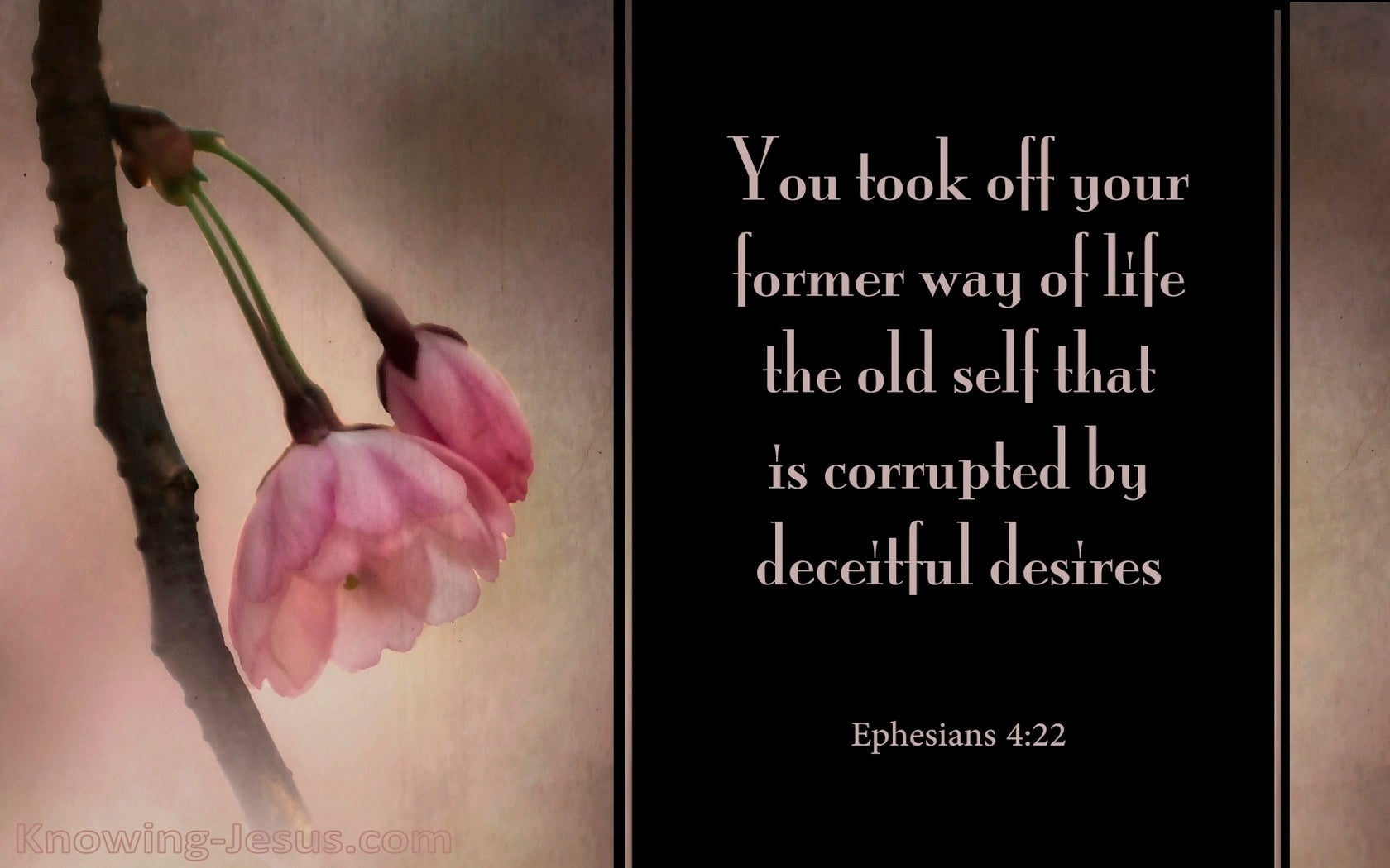Ephesians 4:22 Take Off Your Former Ways (pink)