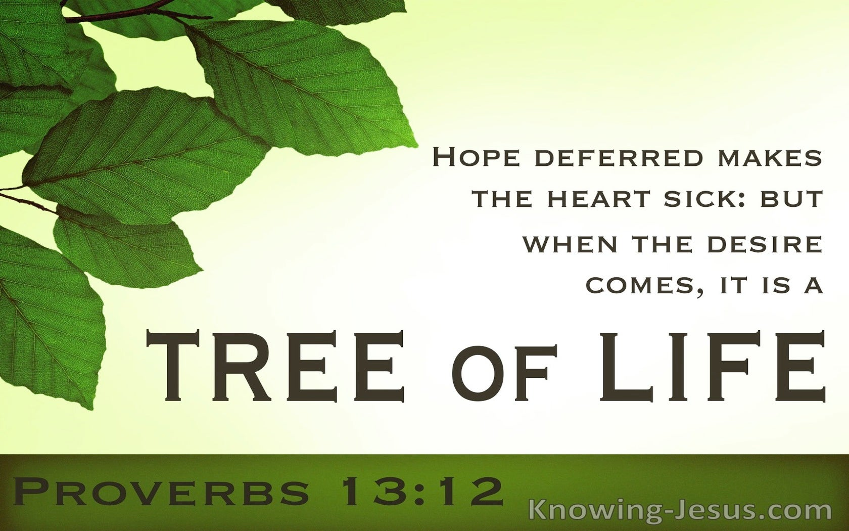 The Joy of Deferred Hope (devotional) (green) - Proverbs 13:12