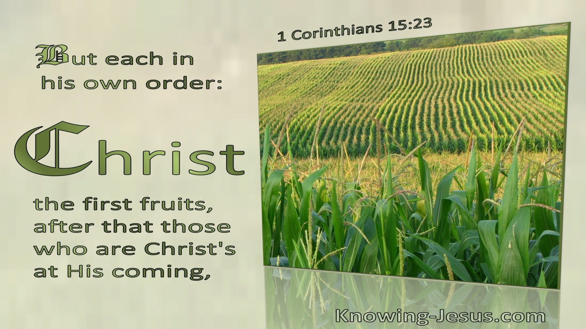 1 Corinthians 15:23 Each In Order : Christ The Firstfruit (green)