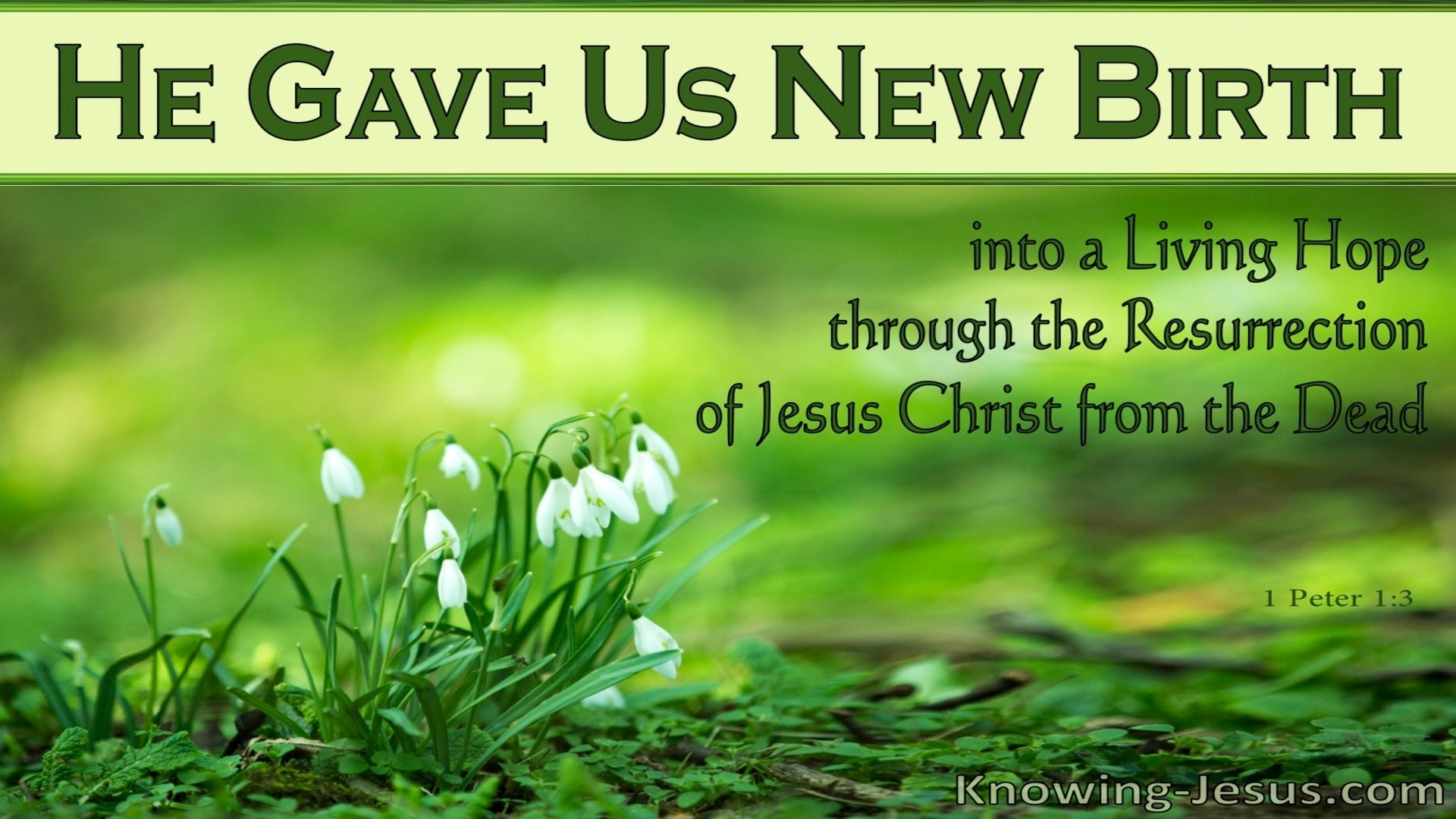1 Peter 1:3  He Gave Us New Birth (green)