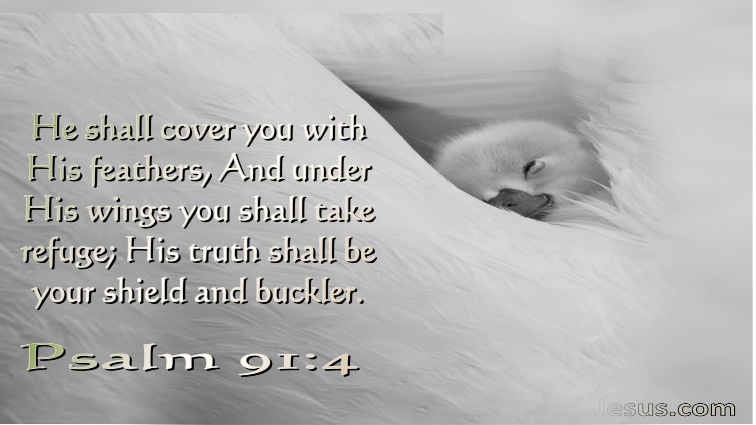 Psalm 91:4 He Shall Cover You With His Feathers His Truth Is Your Shield And Buckler (white)