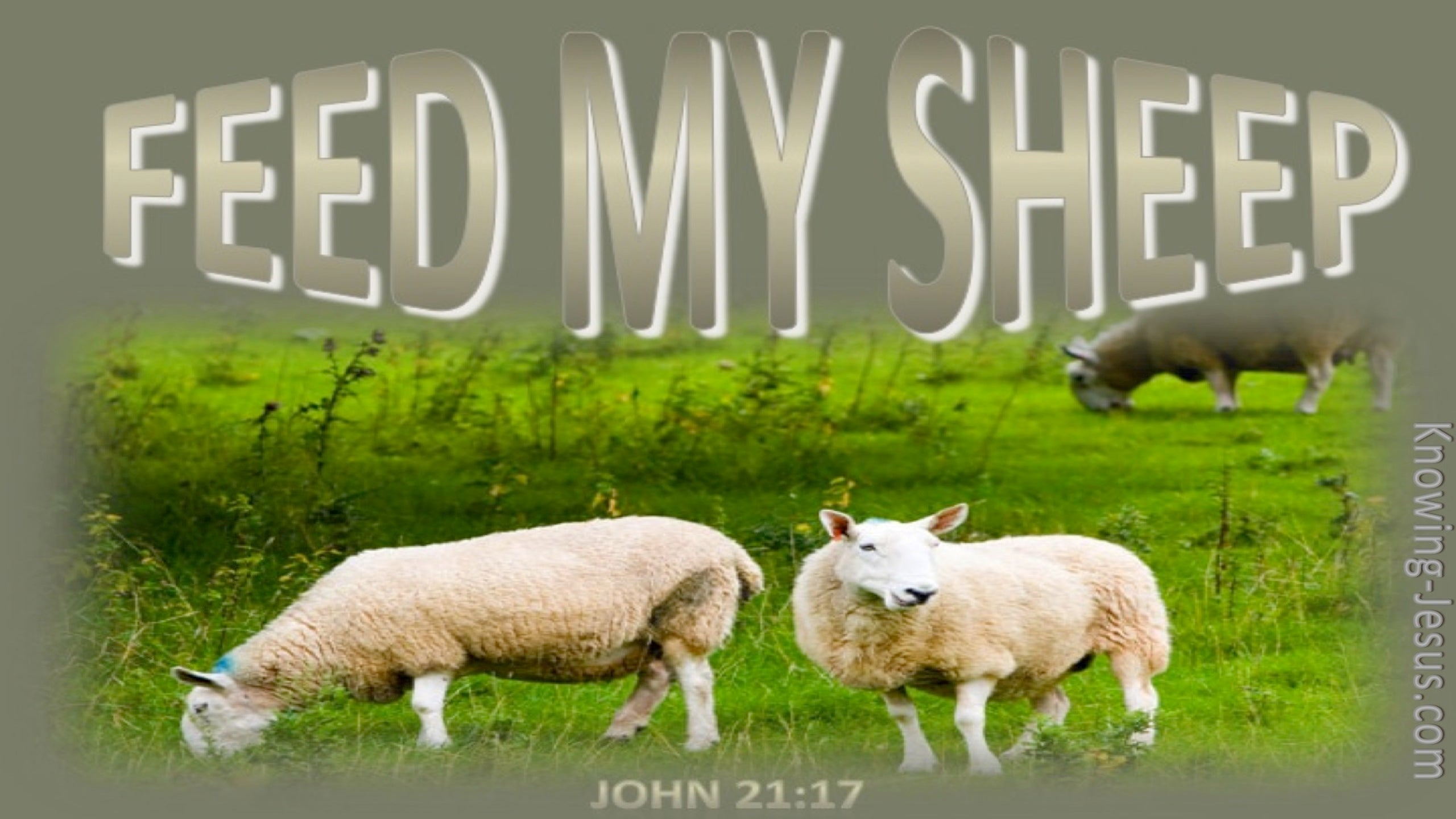 John 21:17 Feed My Sheep (beige)