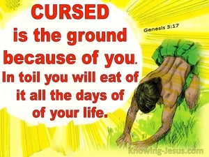 Genesis 3:17 Because You Have Eaten Of The Tree (red)