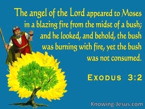 Exodus 3:2 The Angel Of The Lord Appeard To Moses In The Burning Bush (blue)