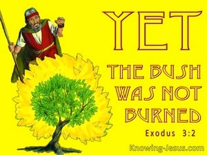 Exodus 3:2 The Angel Of The Lord Appeared To Moses In The Burning Bush (yellow)