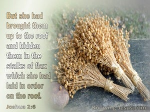 Joshua 2:6 She Brought Them To The Roof And Hid Them In The Stalks Of Flaxgray