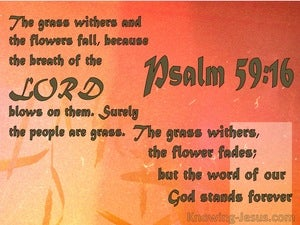 Psalm 40:8 Flowers Fade : God's Word Stands orange