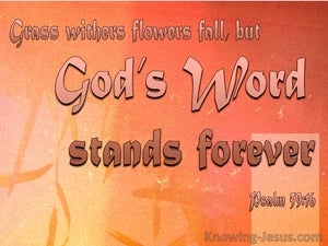 Psalm 40:8 Flowers Fade God's Word Stands pink