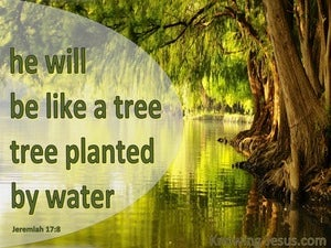 Jeremiah 17:8 He Will Be Like A Tree Planted green