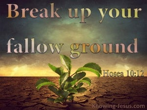 Hosea 10:12 Time To Seek The Lord brown