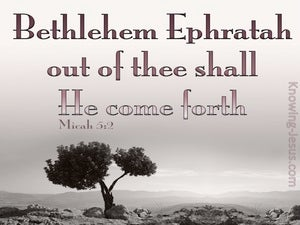 Micah 5:2 Out Of Thee Shall He Come Forth pink