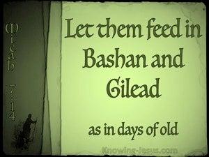 Micah 7:14 Shepherd Your People (green)