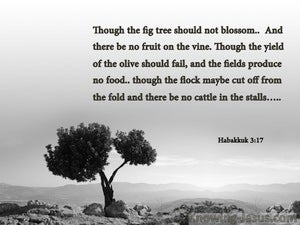 Habakkuk 3:17 Though The Fig tree Should Not Blossom gray
