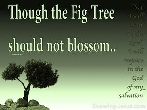 Habakkuk 3:17 Though The Fig tree Should Not Blossom green