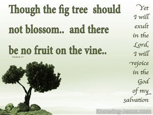 Habakkuk 3:17 Though The Fig tree Should Not Blossom (white)