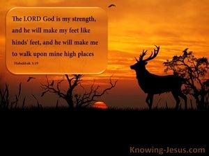 Habakkuk 3:19 Yet Will I Rejoice (devotional)08:07 (orange)