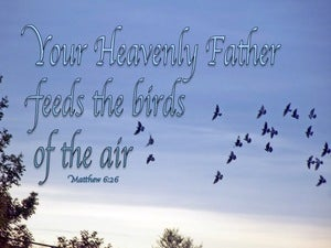 Matthew 6:26 Look At The Birds Of The Air blue