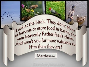 Matthew 6:26 Look At The Birds Of The Air gray