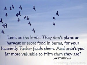 Matthew 6:26 Look At The Birds Of The Air (white)
