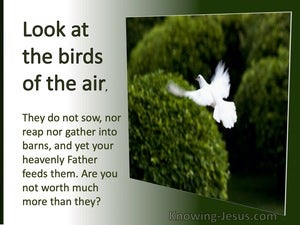 Matthew 6:26 Look At The Fowls of The Air Whey Do No Sow (utmost)05:18 (silver)