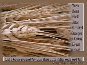 Luke 22:31 Sifted As Wheat (beige)