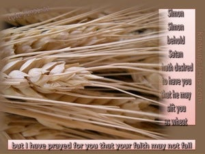 Luke 22:31 I Have Prayed For You (pink)