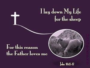 John 10:17 I Lay Down My Life For The Sheep (purple)