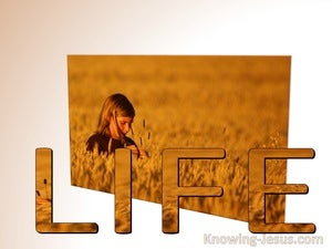 John 19:10 I Have Come That They May Have Life (white) bible
