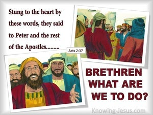 Acts 2:37 Bretheren What Are We To Do red