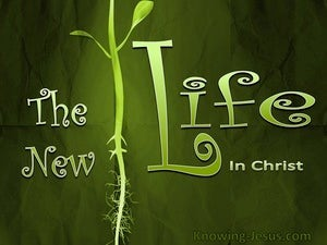 The New Life devotional