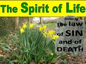 Romans 8:2 The Law Of The Spirit Of Life green