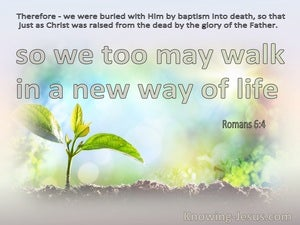Romans 6:4 That We Too May Walk In Newness Of Life (pink)