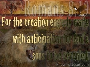 Romans 8:19 The Whole Creation Groans (brown)