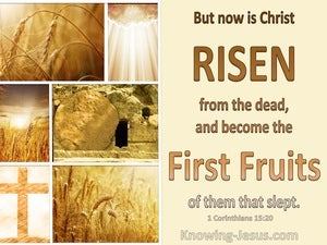 1 Corinthians 15:20 Christ Is Risen The Firstfuir Of Them That Slept beige
