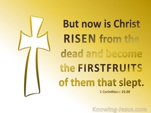1 Corinthians 15:20 Christ Is Risen The Firstfuir Of Them That Slept yellow