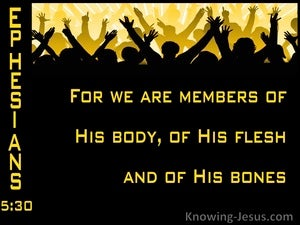 Ephesians 5:30 Memebers Of His Body And His Bones (yellow)
